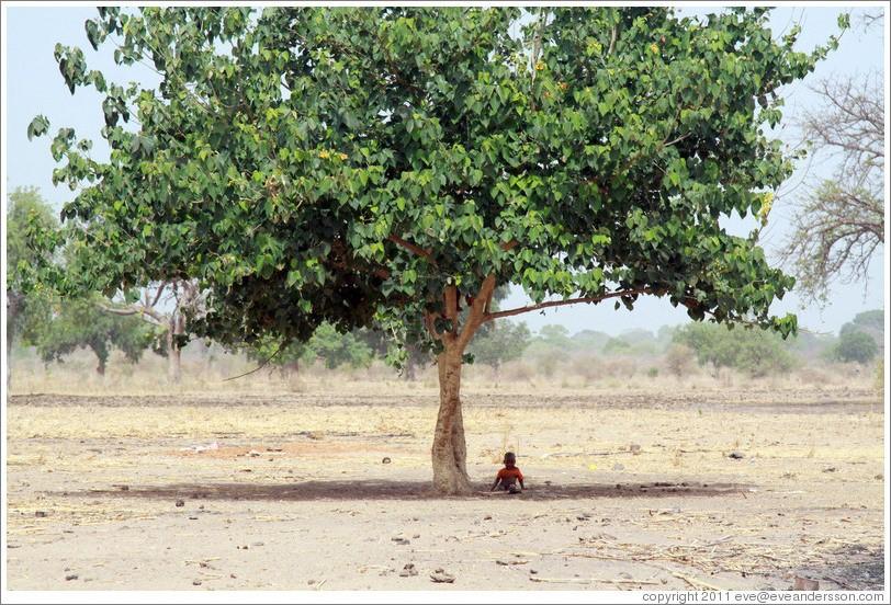 sombra árvore
