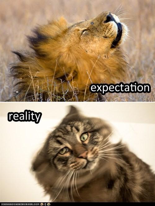 expectativa_realidade